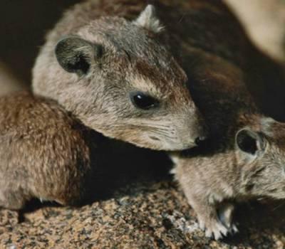 Una mujer les dio veneno para ratas a sus hijos porque no podía alimentarlos